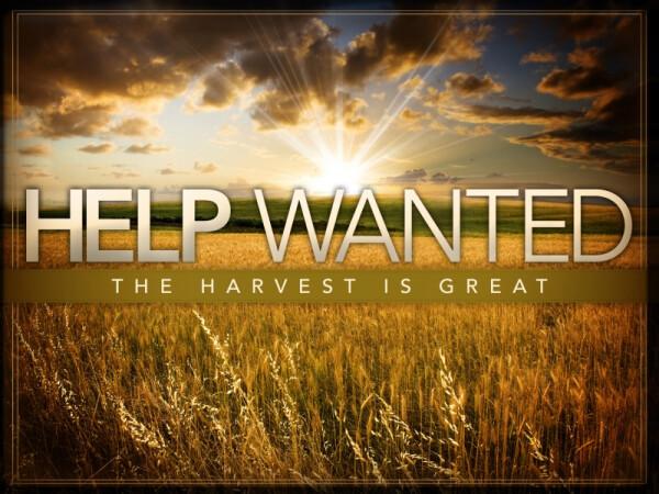 Series: Harvest is Great!